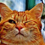 「ブレーメンの音楽隊」をドイツ語で読む 第5回 ~働く意欲がなくなったら水死させられそうになった猫~