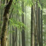 「ブレーメンの音楽隊」をドイツ語で読む 第9回 ~ブレーメンにたどり着けずに森で野宿~