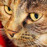 「ブレーメンの音楽隊」をドイツ語で読む 第4回 ~リストラ寸前の猫~